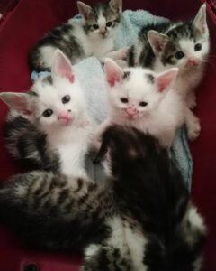 Sechs Kitten