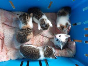Tara, Tinkerbell, Flo, Felix und Finlay